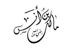 أين ولد الإمام مالك؟