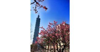 كم يبلغ طول برج تايبيه