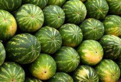 ماذا كان يسمي العرب سوق الفاكهة في الإسلام؟