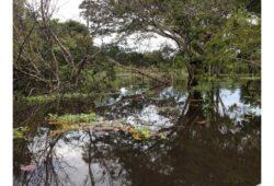 في أي قارة تقع غابات الأمازون؟