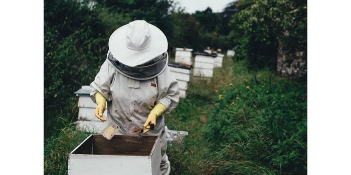 كم تنتج خلية النحل من العسل