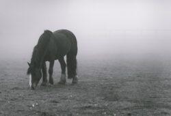 كم يزن الحصان؟