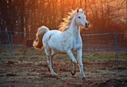 ماذا تسمى انثى الحصان؟