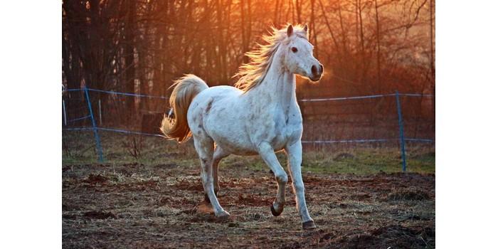 ماذا تسمى انثى الحصان سيول Soyoul