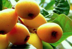 ما اسم فاكهة المزاح بالفرنسية؟