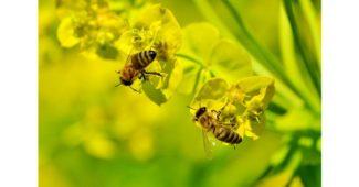 ما دور شغالات النحل