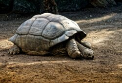 ما هو الحيوان الأطول عمرا؟