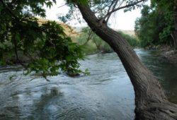 اين يقع نهر الليطاني؟