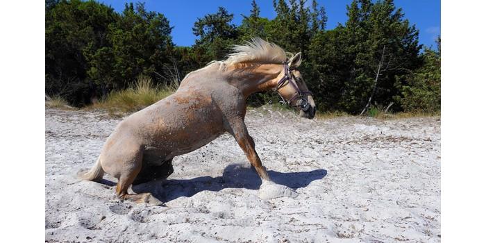 هل يجلس الحصان سيول Soyoul